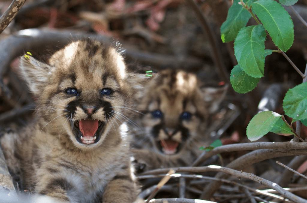 Image credits National Park Service/Flickr