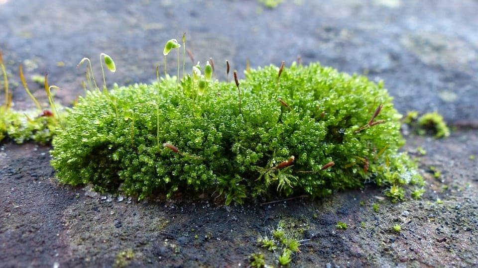 [Image: lichen.jpg]