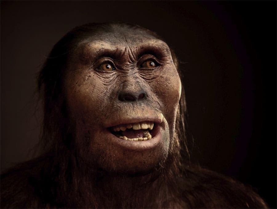 Lucy hominin
