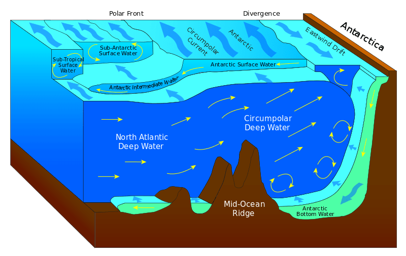 Graphic depiction of Antarctic deep waters. Image via Wiki Commons.