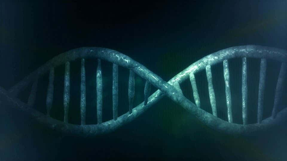 A major difference between dna and rna could explain why one is the a major difference between dna and rna could explain why one is the go to blueprint for life malvernweather