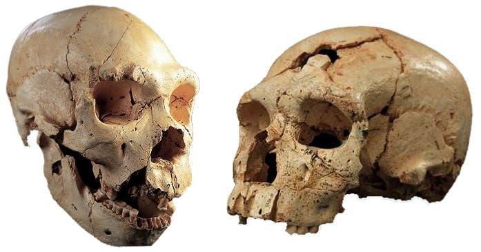 Neanderthal eyes