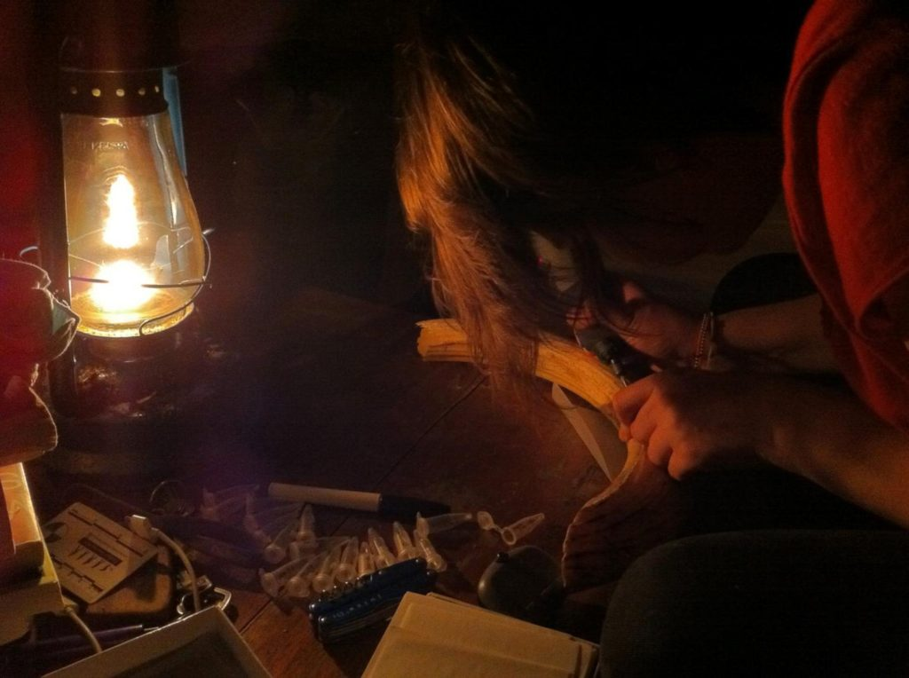 Kendra Chritz sampling hippo enamel by kerosene lamplight in Uganda. Credit: University of Utah