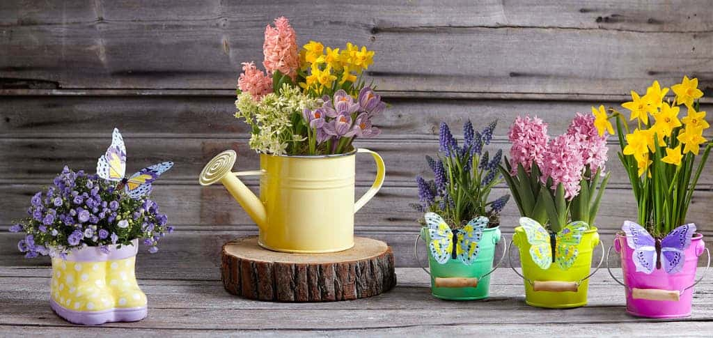 7 potted plants that will remove indoor air pollution from your home potted plants mightylinksfo