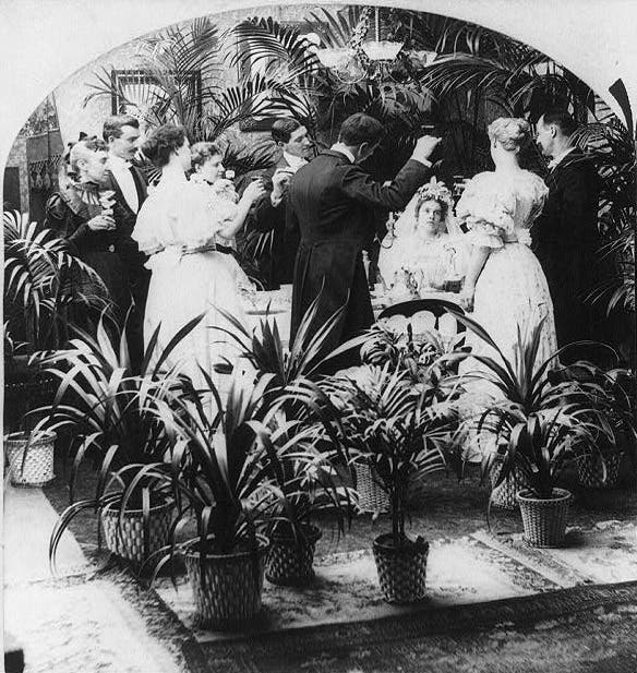 victorian potted plants