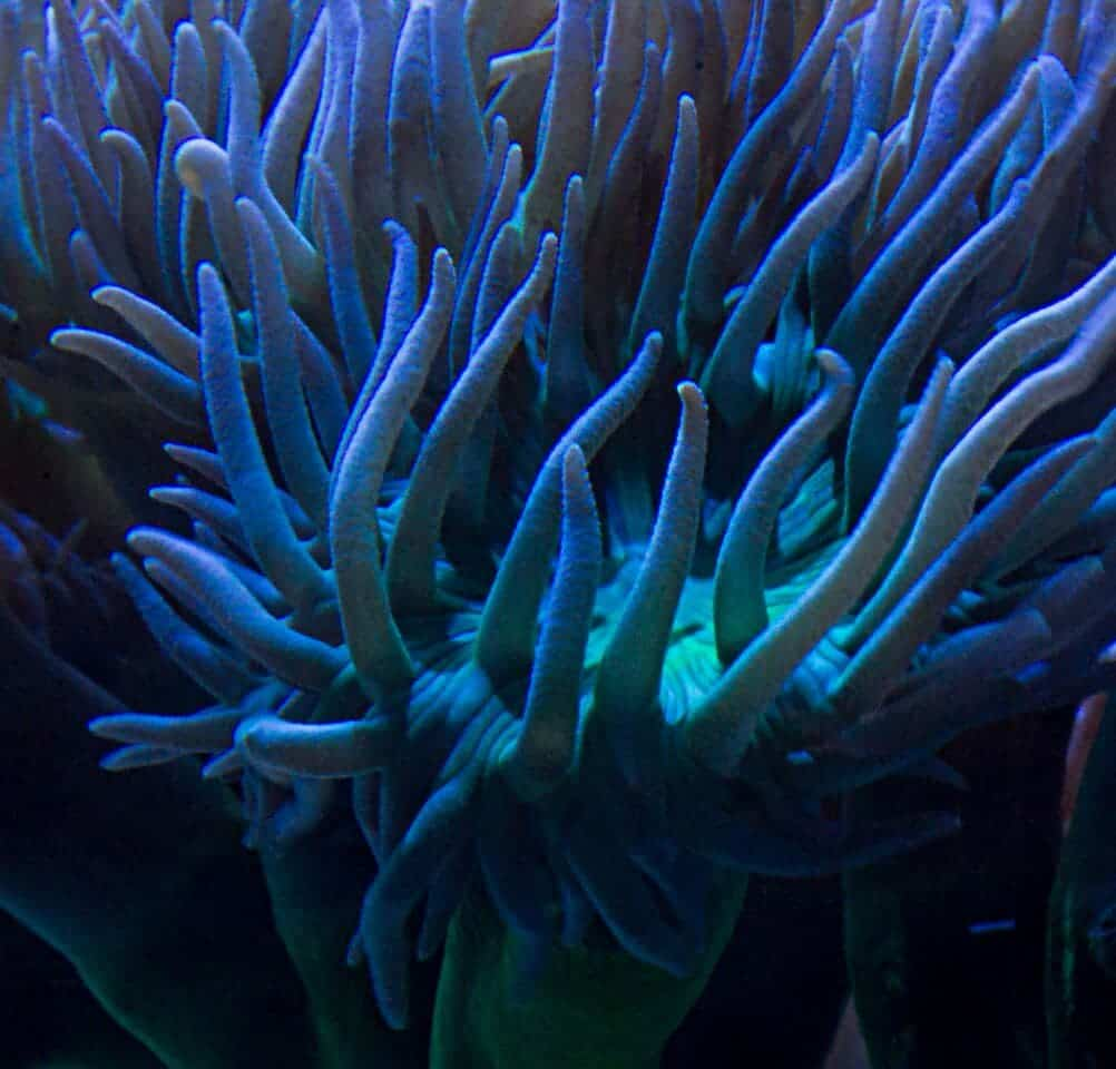 corals5