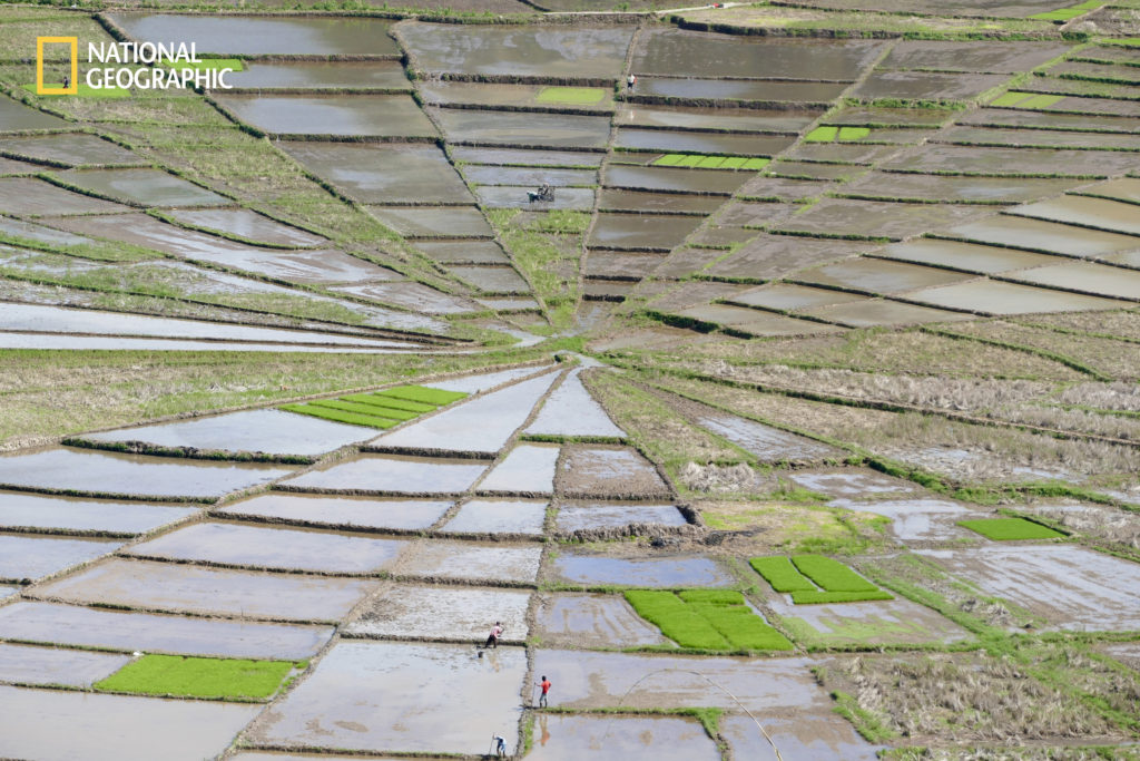 """Photo and Caption by Wendy Sinclair / 2016 National Geographic Nature Photographer of the Year. """"An unusual and intricate spider-web shaped rice field in Cancar - Flores, Indonesia."""""""