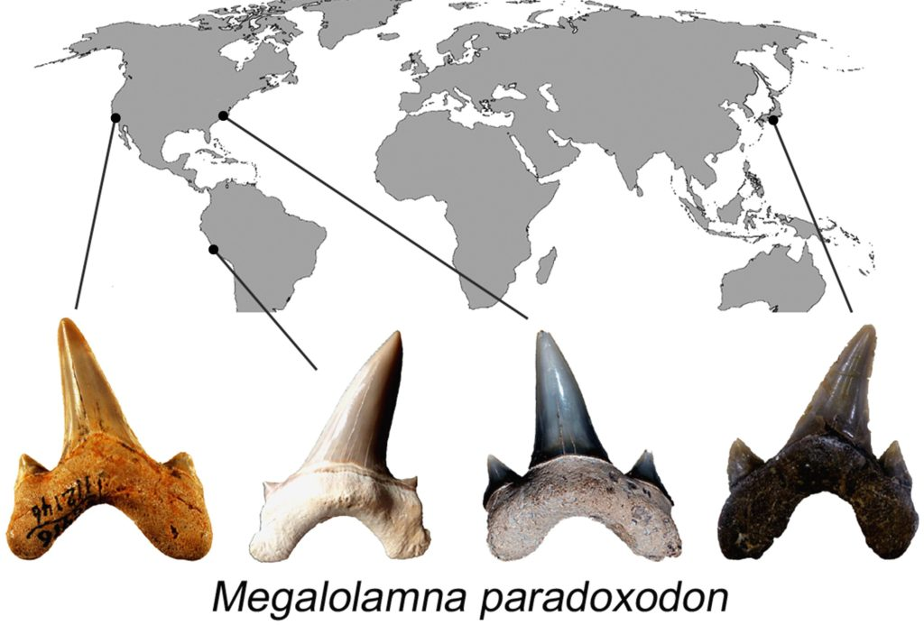 The geographical distribution of the new ancient shark's teeth. Credit: Kenshu Shimad