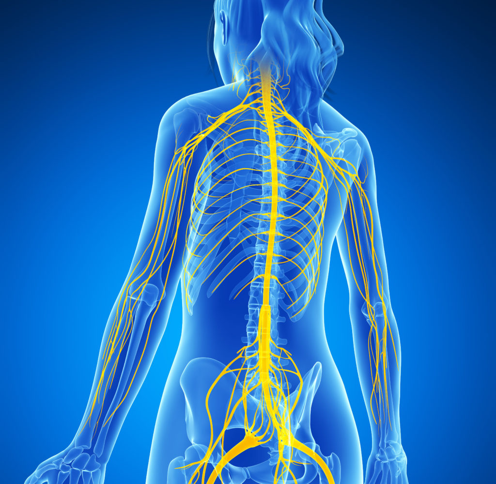 The nervous system is like an electrical wiring. Credit: GuidesHealth.com