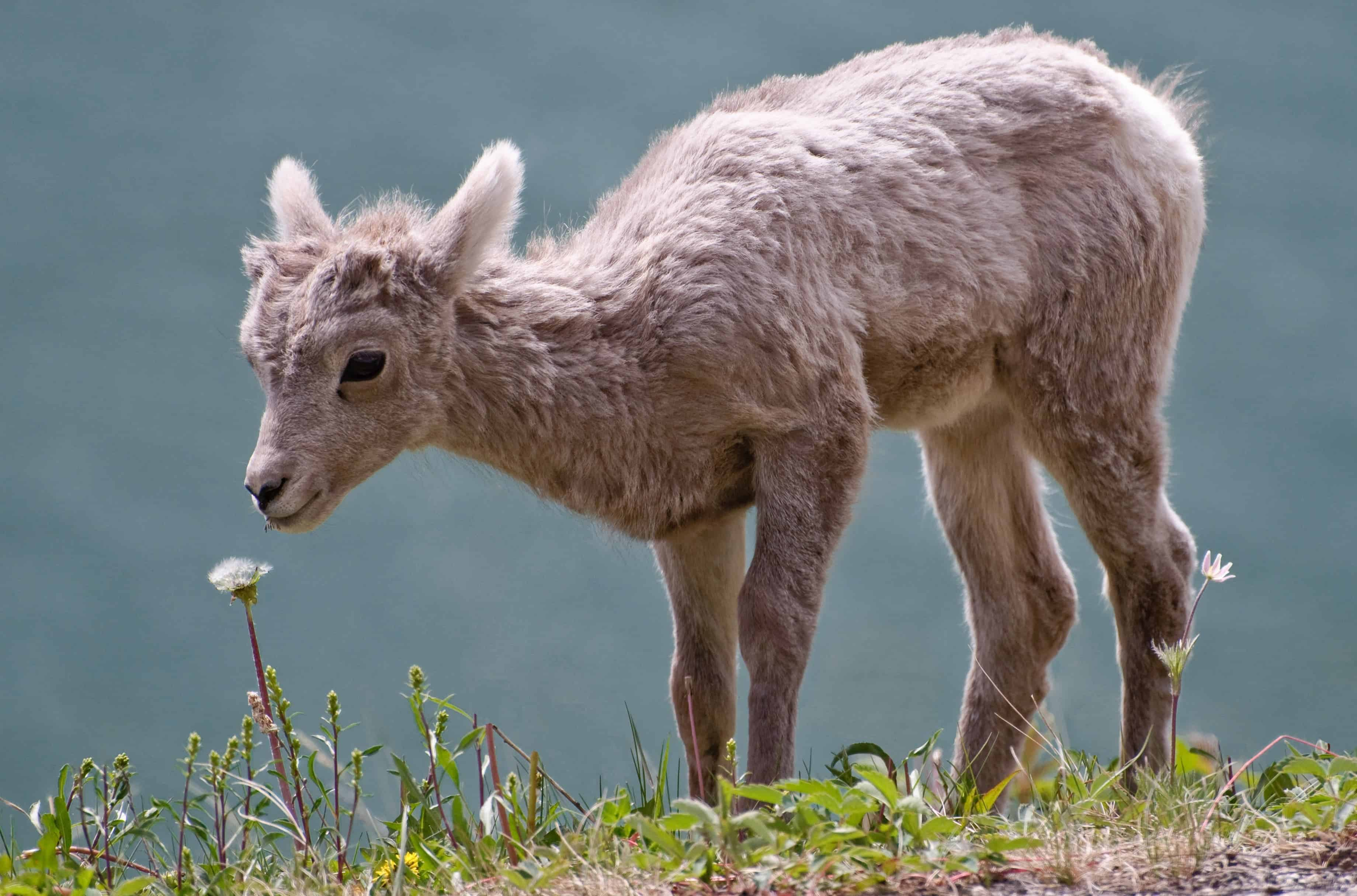 wildlife populations expected to plummet 67 by 2020 compared to