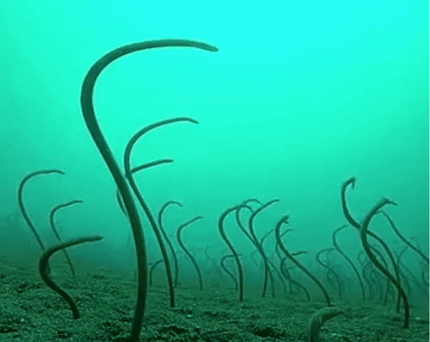 The Garden of Eel the out of this world, mildly disturbing
