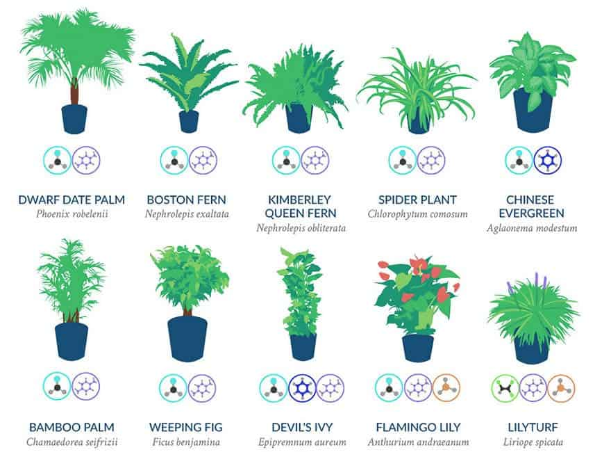 Nasa Tells Us Which Plants To Buy For Cleaner Air In