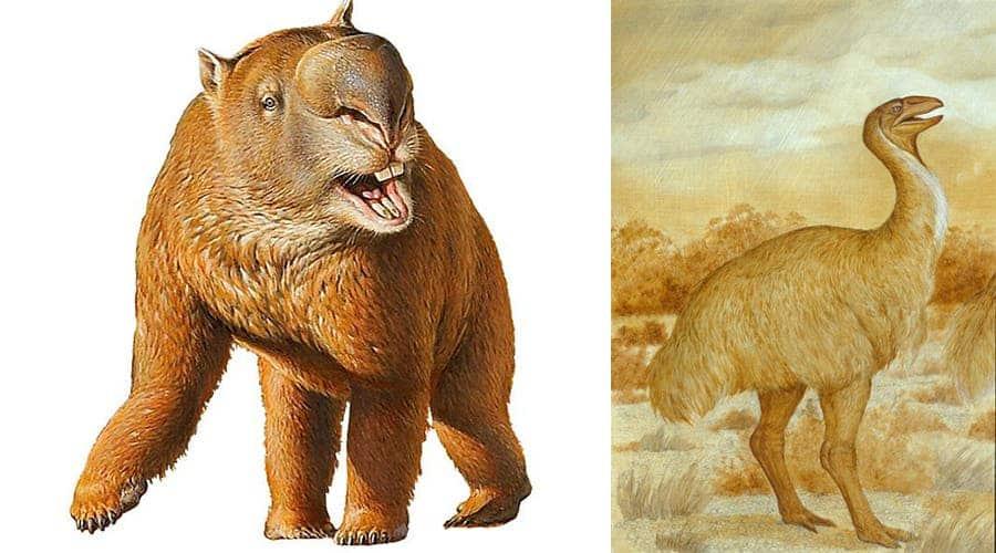 Left: Diprotodon optatum, RIght: Genyornis newtoni. Credit: Anne Musser © Australian Museum