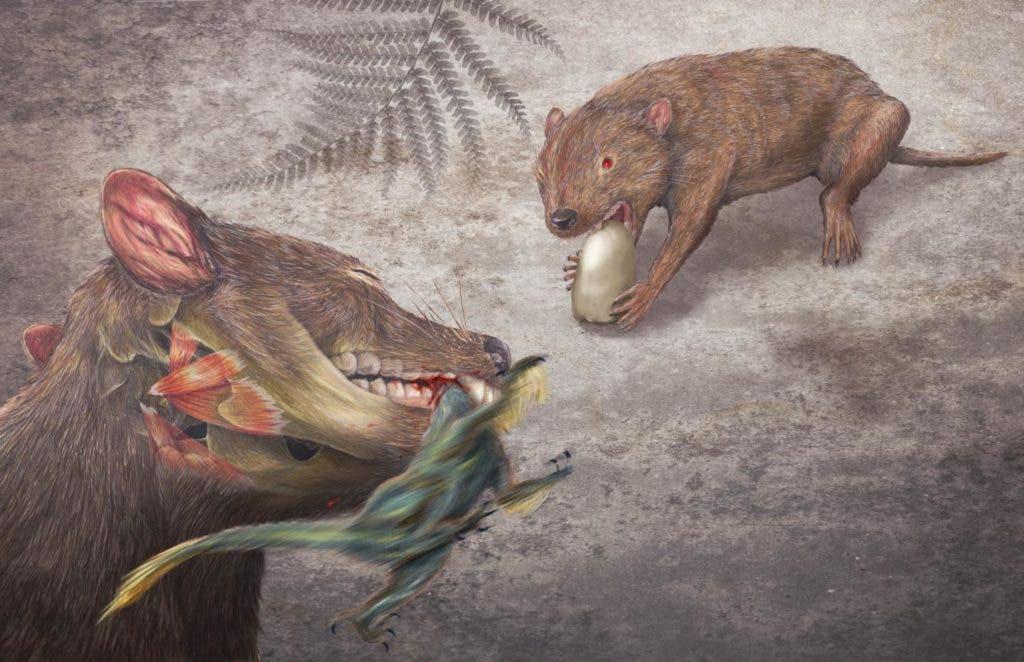 Artist impression of Didelphodon vorax. Credit: Misaki Ouchida.