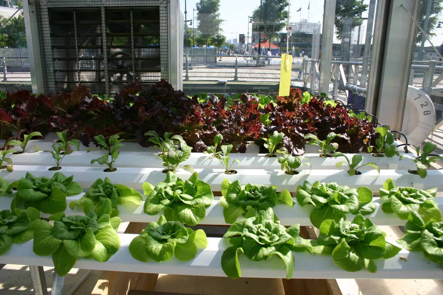 Forum on this topic: How to Grow Plants Using Hydroponics, how-to-grow-plants-using-hydroponics/