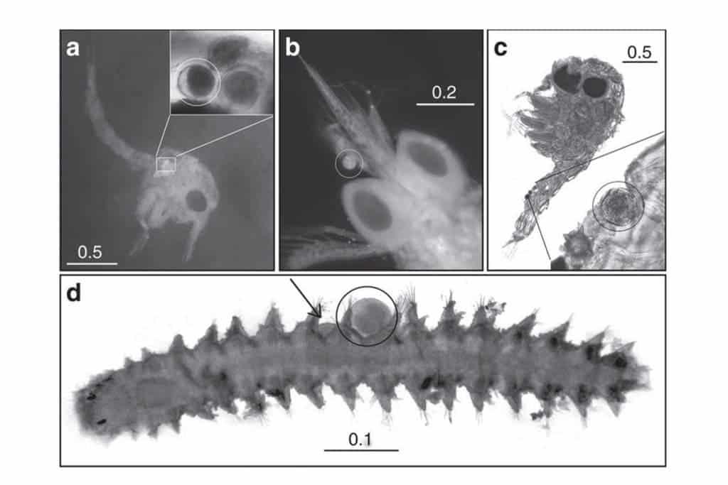 Microscope imaging reveals pollen grains on the body of small marine fauna. Credit: Van Tussenbroek, B. I. et al