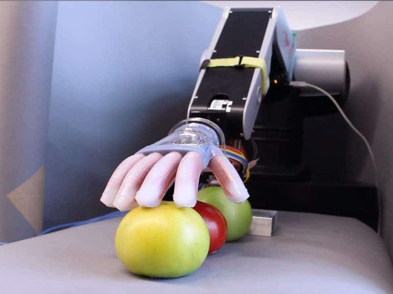 The artificial hand made at Cornell University was able to tell apart tomatoes by their softness and find the ripest one. Credit: Cornell University.
