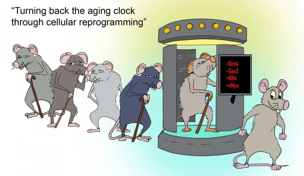 Credit: Juan Carlos Izpisua Belmonte Lab /Salk Institute.