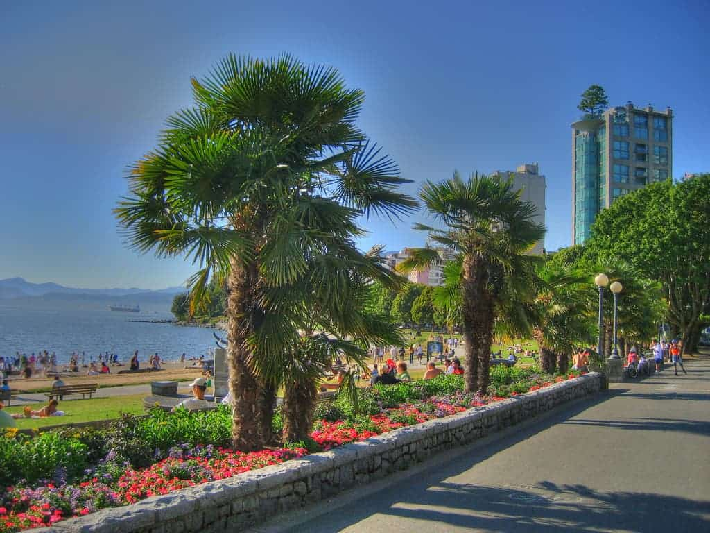how palm trees thrive in vancouver despite the freezing canadian