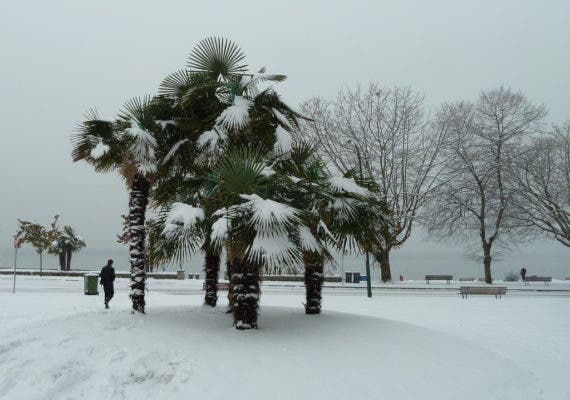 Vancouver's palms at English Bay during the winter. Credit: Flickr, Wendy Cutler.