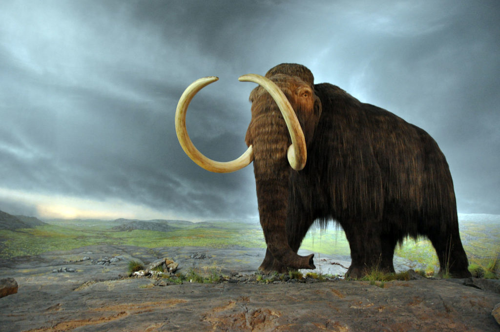 1280px-Woolly_mammoth