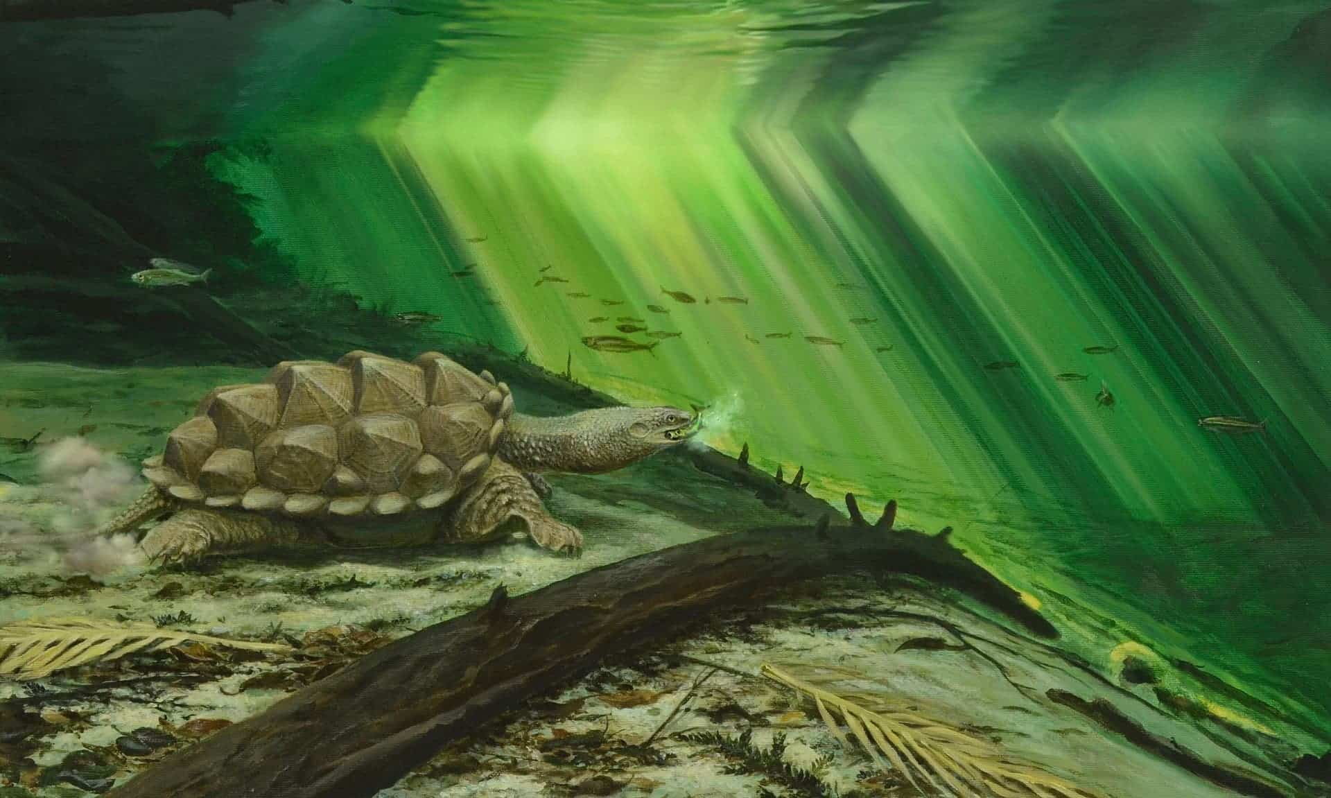 the 60 million year old turtle Here's all you need to know about the evolution of turtles  prehistoric snake  titanoboa 60 million years ago in the swamps of south america.