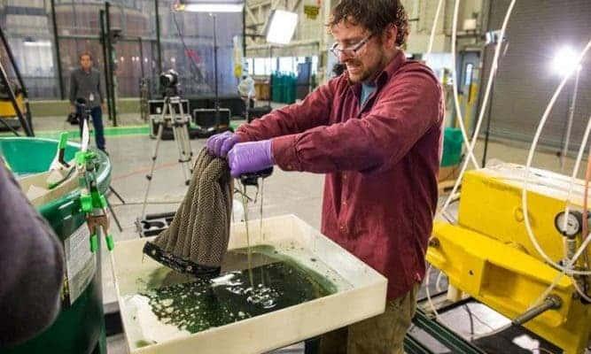 Ed Barry, Argonne researcher, wrings an Oleo Sponge after a test #sciencecanbemessy. Credit: Mark Lopez/Argonne National Laboratory