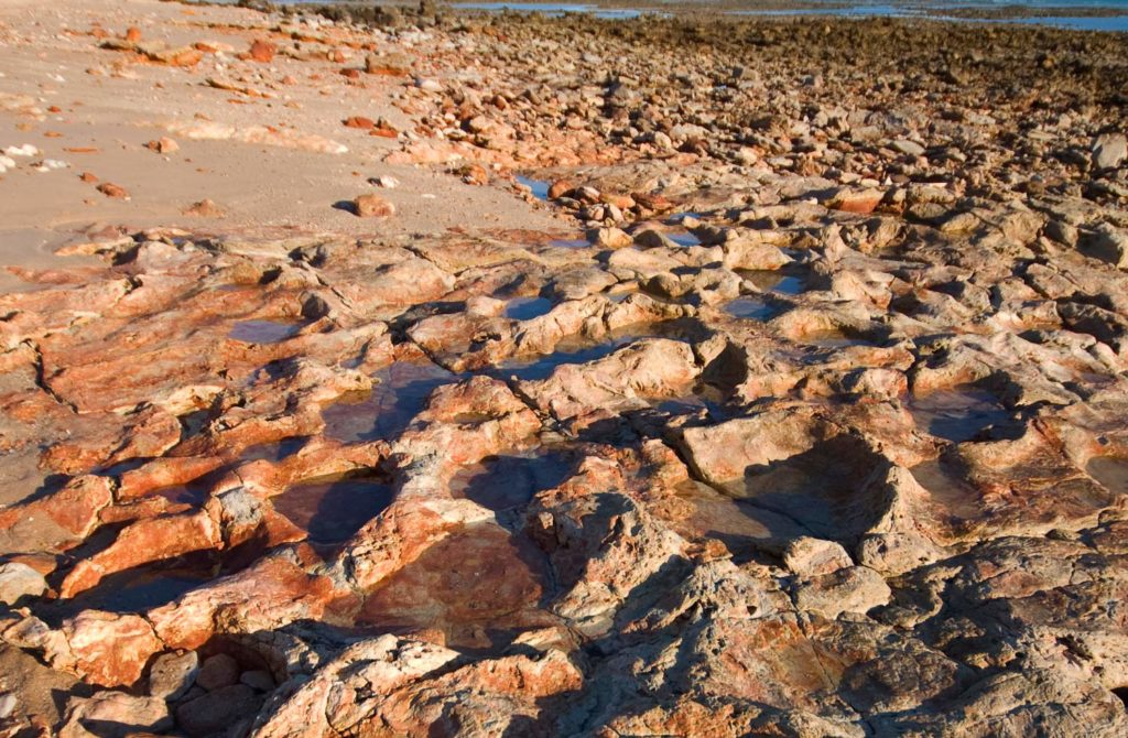 Some of the many dinosaur tracks uncovered at Walmadany area, Western Australia. Image credit: Steve Salisbury.