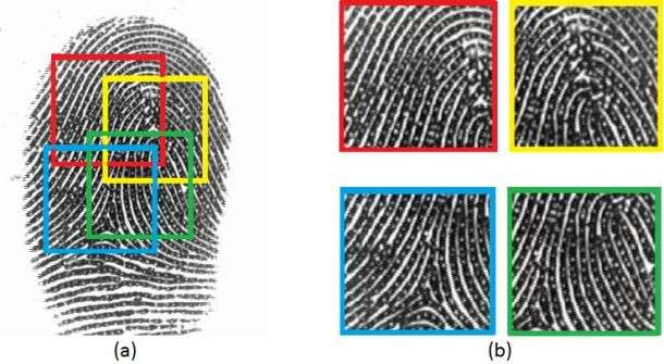 It's true that no two fingerprints are the same but smartphone fingerprint sensors only partially record the area. Multiple partial fingerprints are captured for the same finger during enrollment by the smartphone. Credit: NYU Tandon School of Engineering.