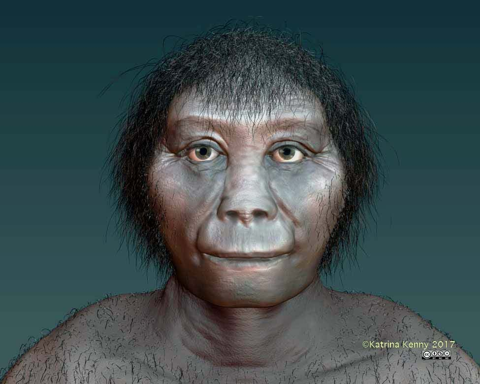 A digital reconstruction of the face of H. floresis. Credit: ANU.
