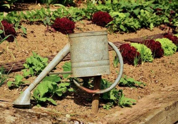 gardening health