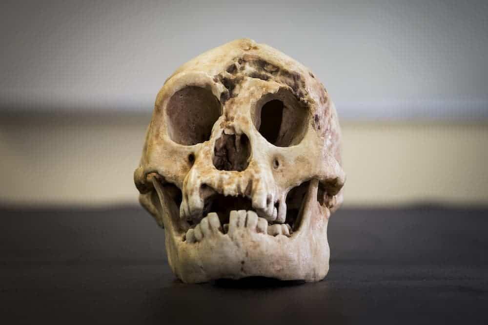 Homo Floresiensis skull. Credit: Stuart Hay - ANU.