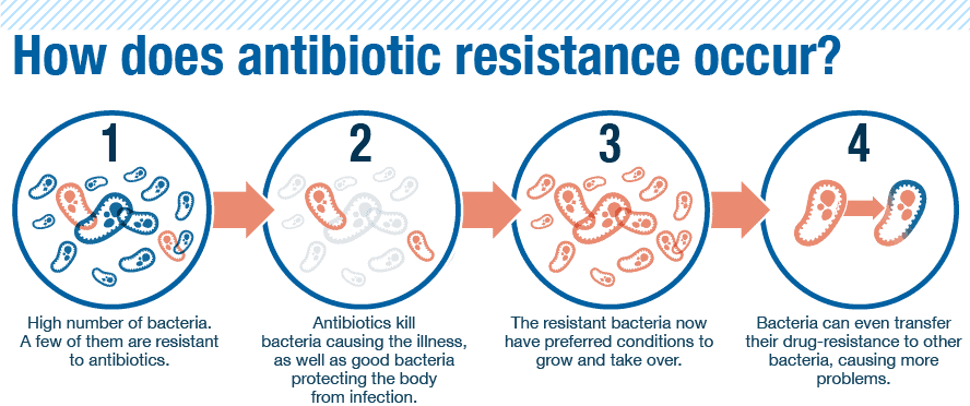 definition for antibiotic resistant bacteria Antibiotic resistance - adaptation of bacterial strains to certain of the antibiotic medications doctors prescribe to treat infections the bacteria cause.