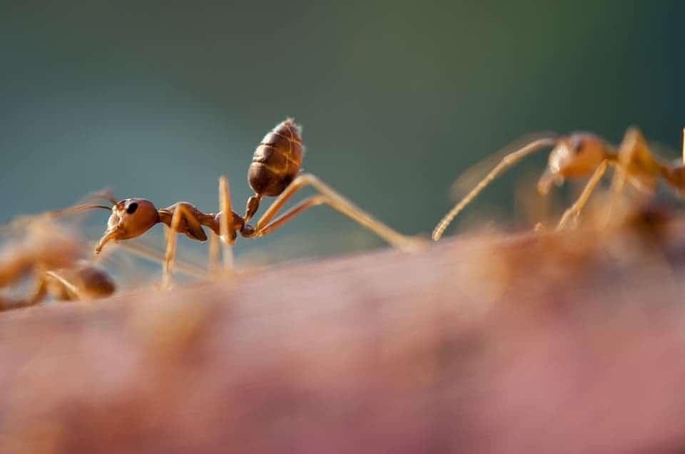 Ant Close Up.