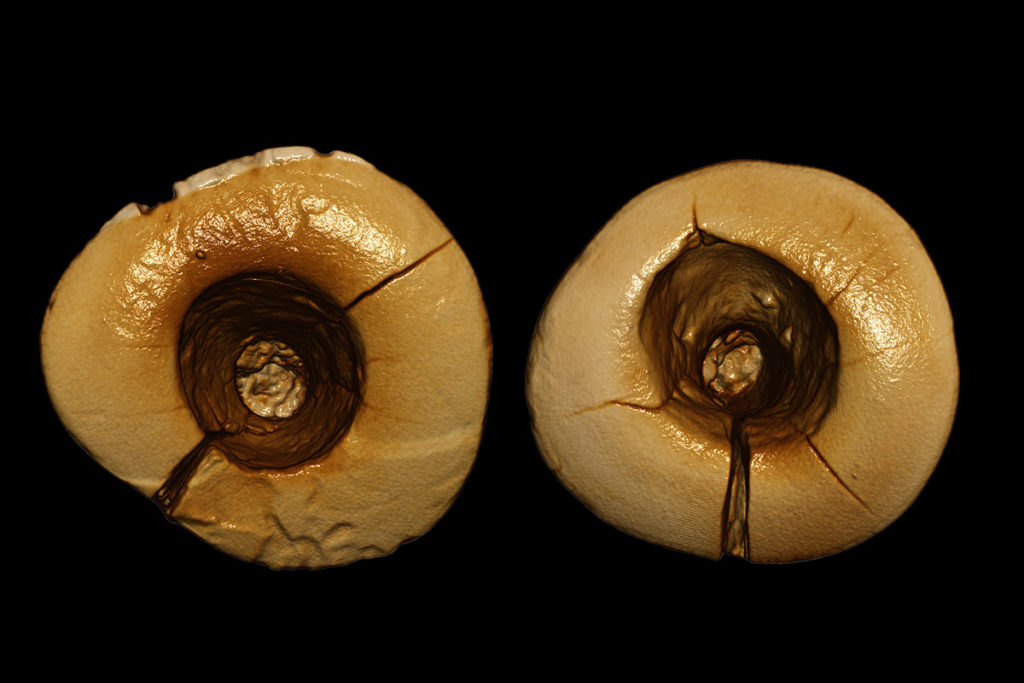 Oldest cavities.