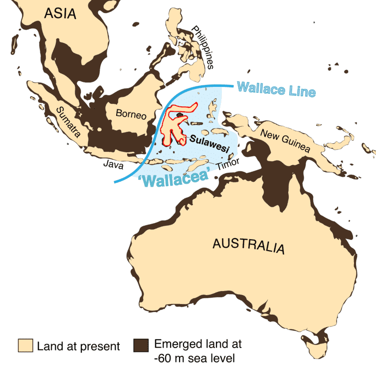 Wallacea, the zone of oceanic islands positioned east of the Wallace Line, one of the world's major biogeographical boundaries, and lying between the continental regions of Asia and Australia-New Guinea. Credit: Adam Brumm,