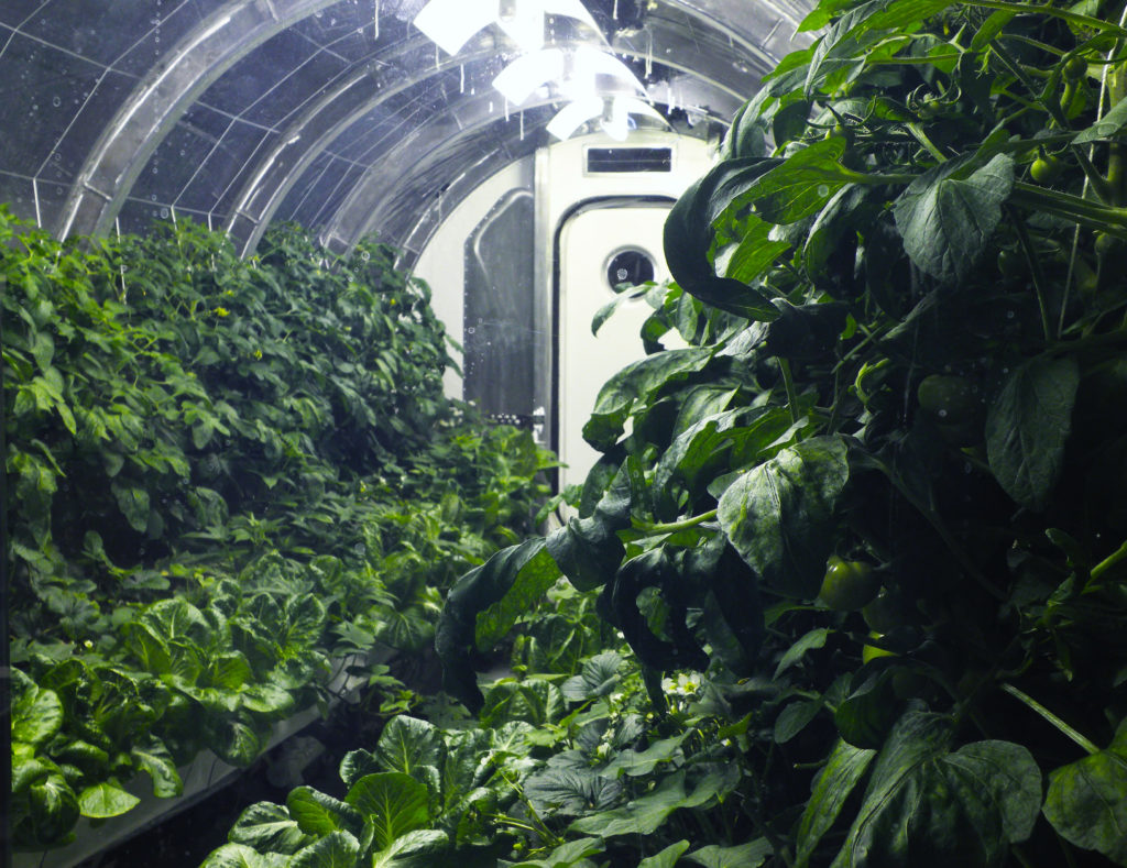 Inside_greenhouse.