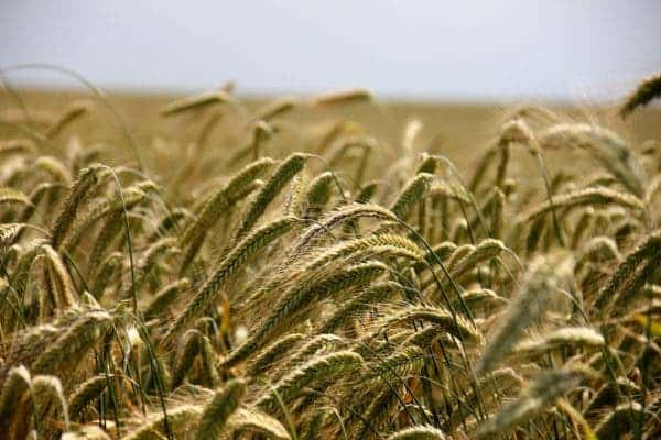 organic food vs conventional farming
