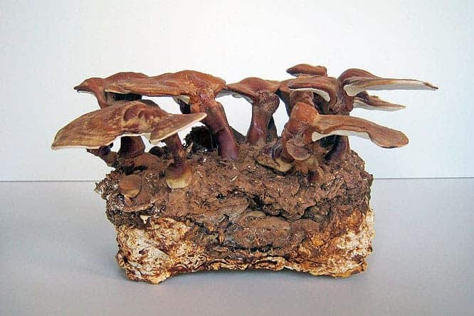 How A Mycologist Is Making Living Bricks Out Of