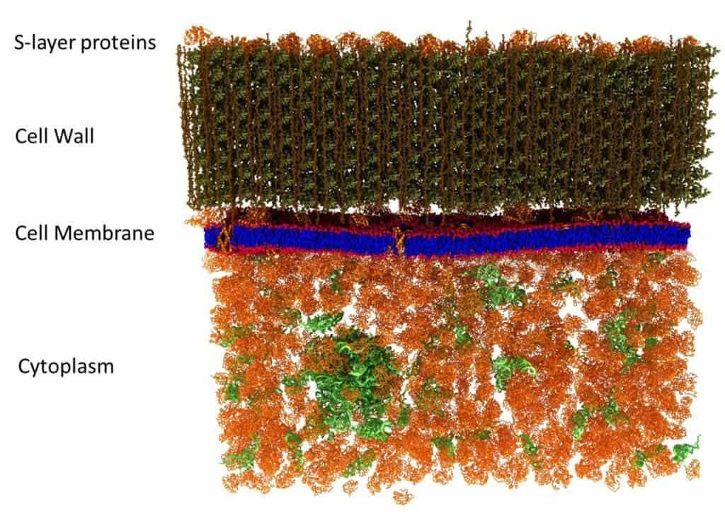 Membrane model.