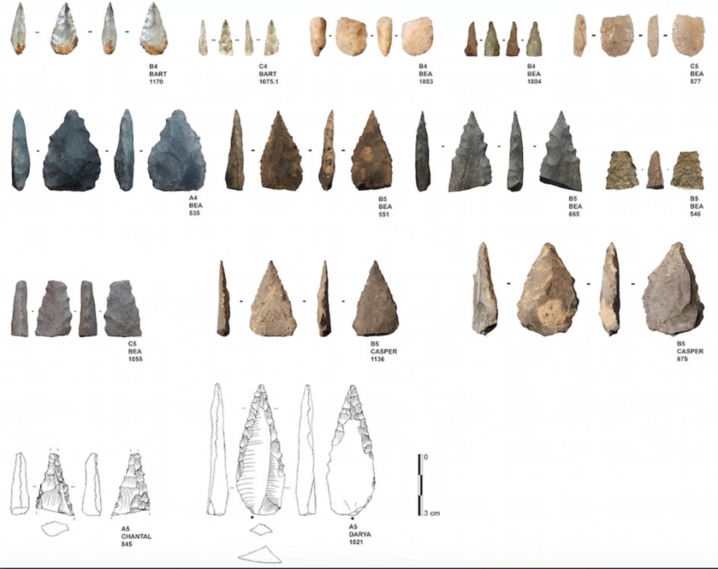 A selection of 14 Middle Stone Age flakes found in a cave in South Africa. These come from a batch of 25; imaged here are only the ones with serrated edges. Credit: PLOS ONE.