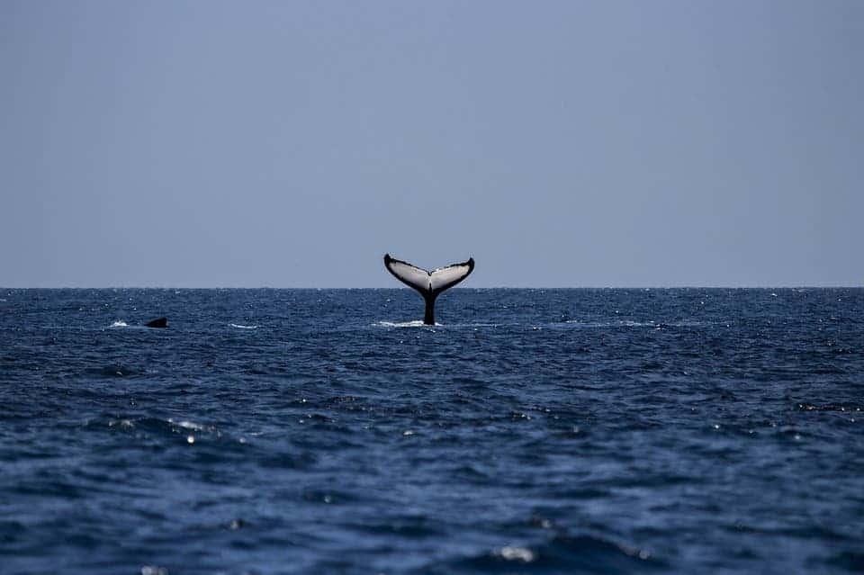 Whale Fins.