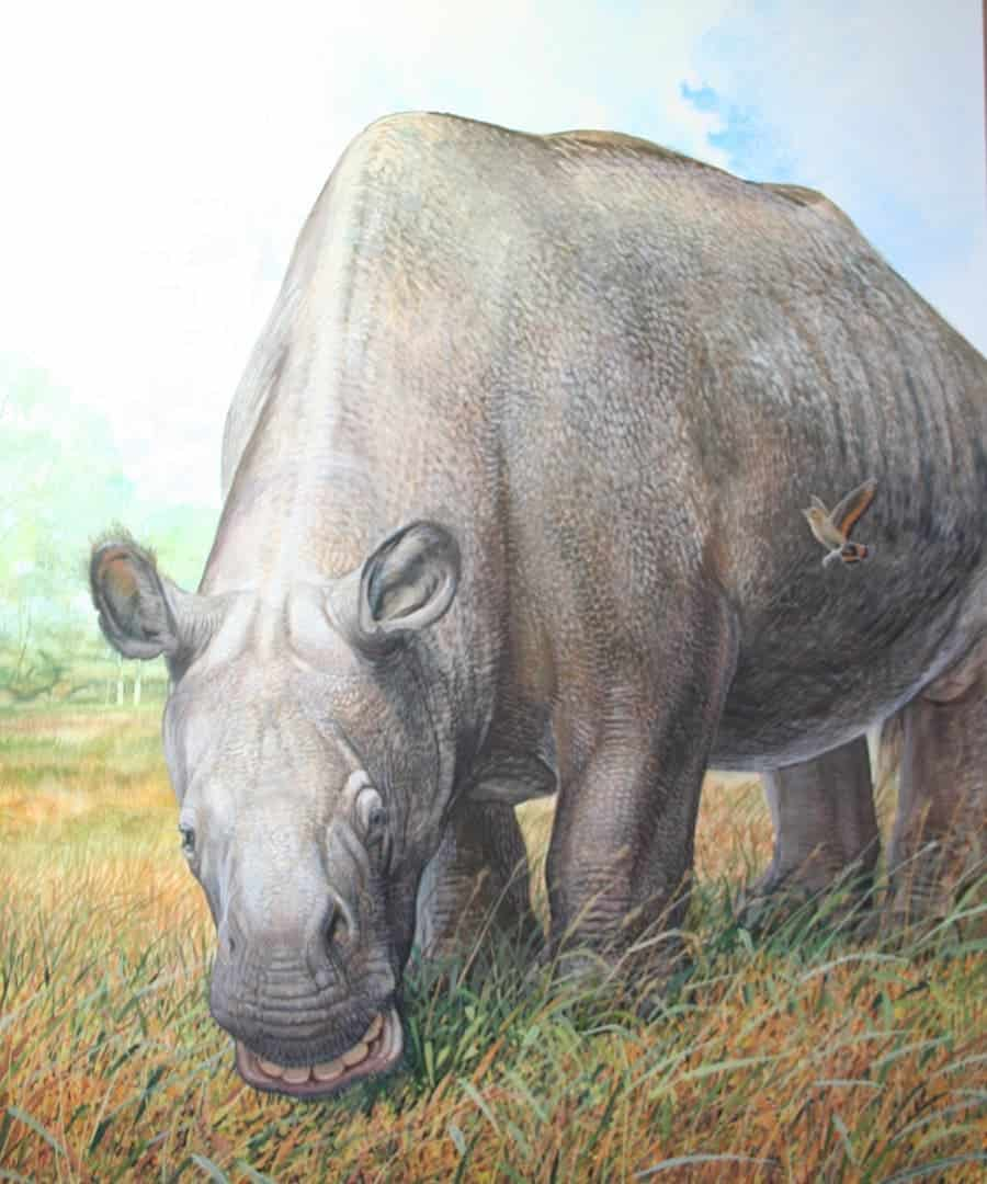 An artist's impression of the Toxodon — body of a rhino, head of a hippo, teeth of a rodent. Illustration by Peter Schouten.