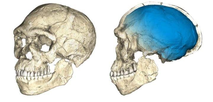 Composite reconstructions of the earliest know Homo sapiens. CREDIT: PHILIPP GUNZ, MPI EVA LEIPZIG