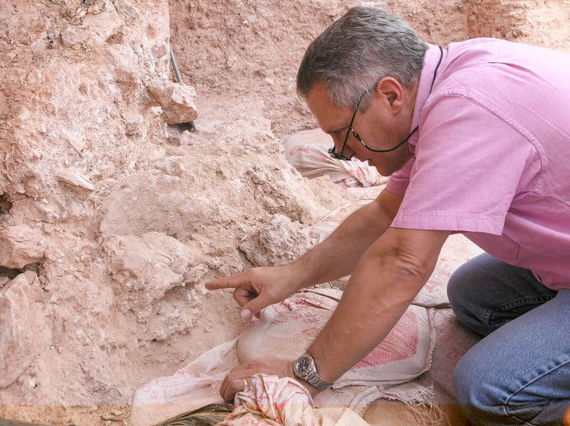 Max Planck Institute paleoanthropologist Jean-Jacques Hublin points at the eye orbits of a crushed human skull more than 300,000 years old. Credit: Shannon McPherron/Nature.