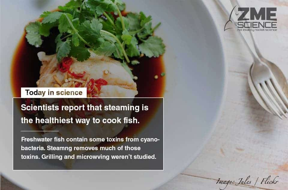 Steaming fish makes for a healthier meal with fewer toxins