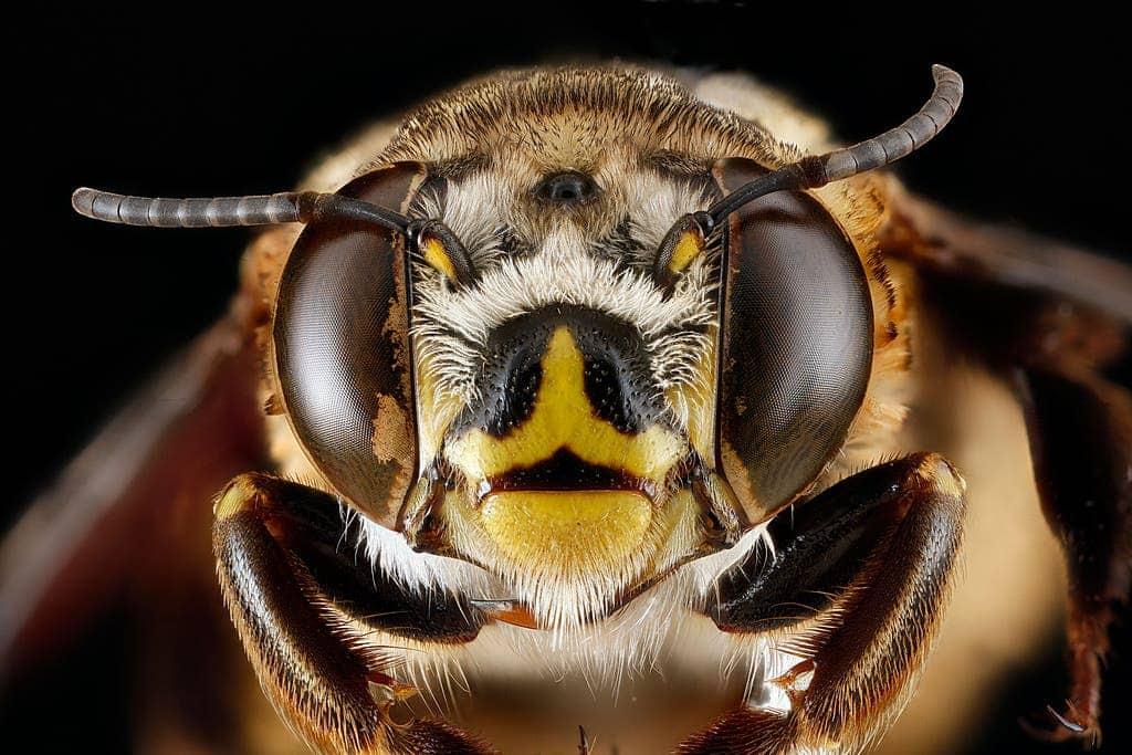 Eyes of bee