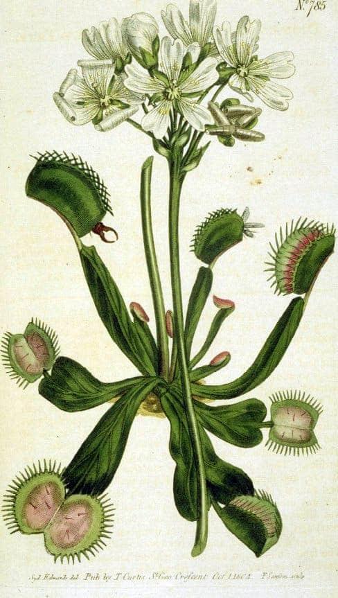 Plant Files: The Venus Flytrap