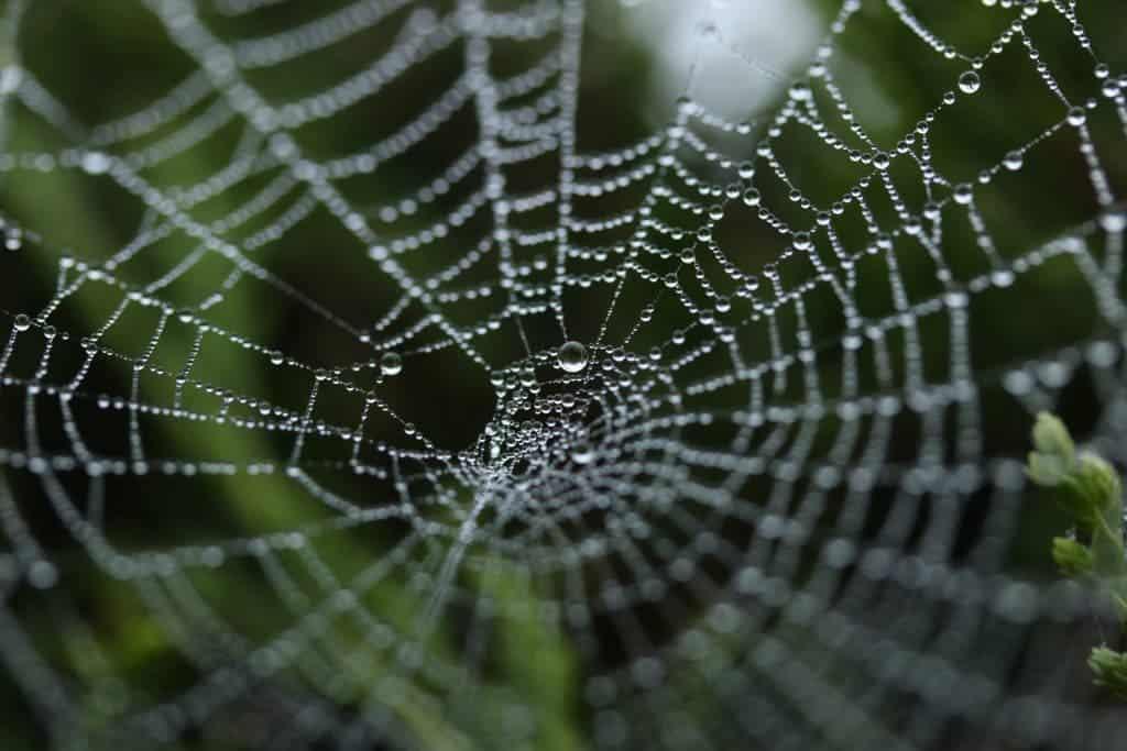 Spider web silk