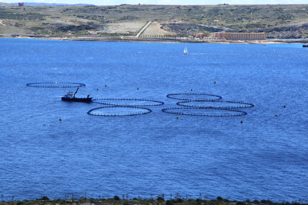 Thousands of atlantic salmon escape fish farm near autos for Fish farms near me